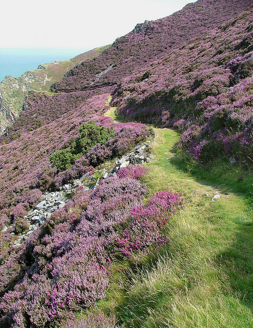 Truly spectacular sea cliff paths are the order of the day all along the Exmoor and North Devon coast