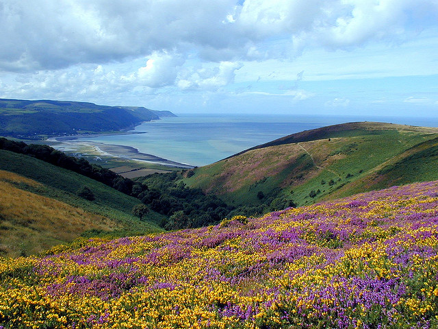 Heathlands of Exmoor looking down into Porlock Bay